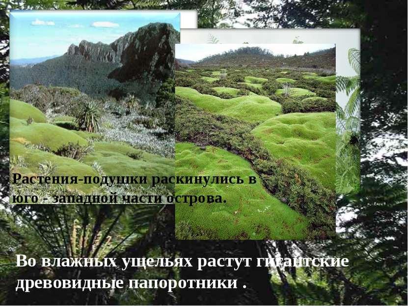 Во влажных ущельях растут гигантские древовидные папоротники . Растения-подуш...