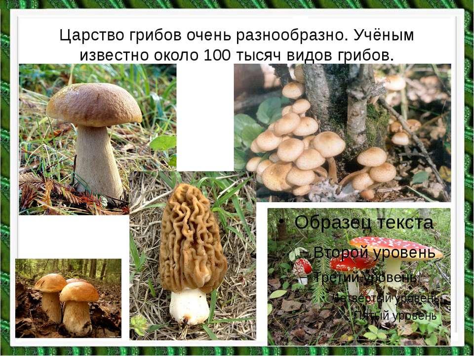 Царство грибов очень разнообразно. Учёным известно около 100 тысяч видов грибов.