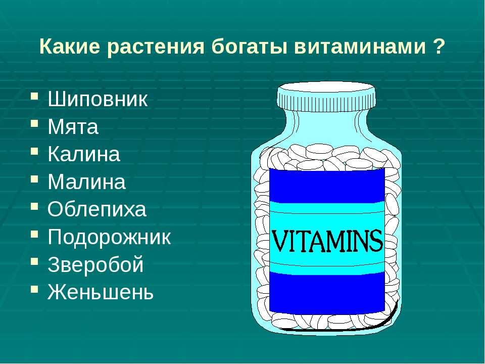 Какие растения богаты витаминами ? Шиповник Мята Калина Малина Облепиха Подор...