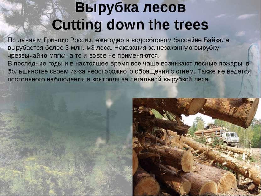 Вырубка лесов Cutting down the trees По данным Гринпис России, ежегодно в вод...