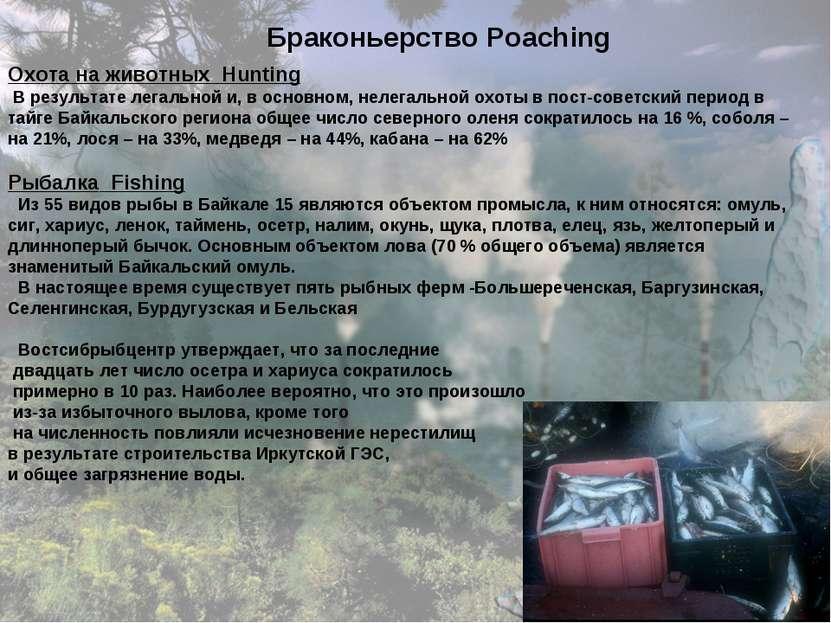 Браконьерство Poaching Охота на животных Hunting В результате легальной и, в ...
