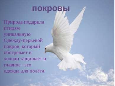 Природа подарила птицам уникальную одежду, которая Природа подарила птицам ун...