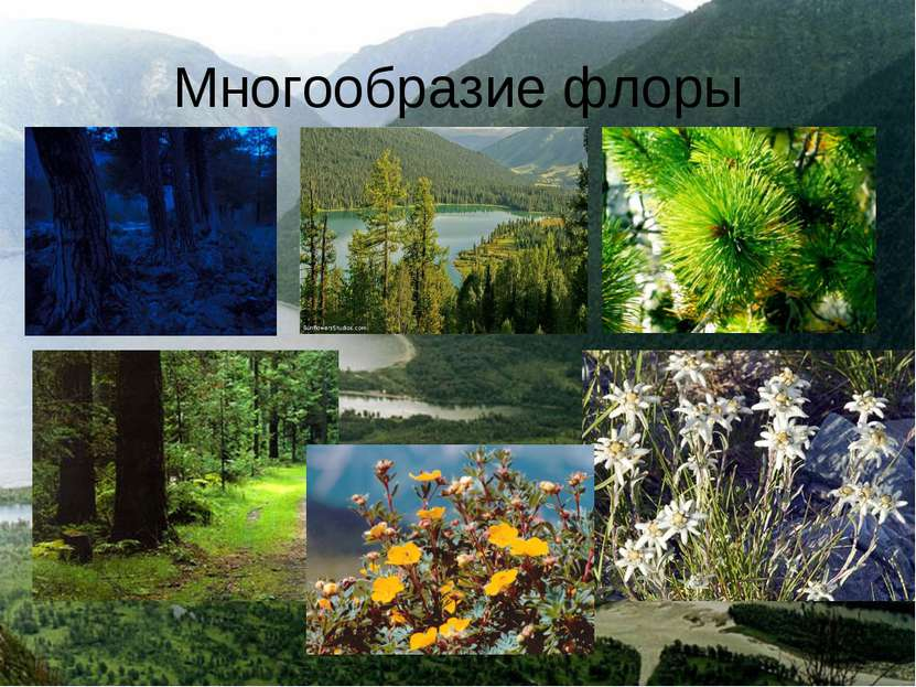 Многообразие флоры
