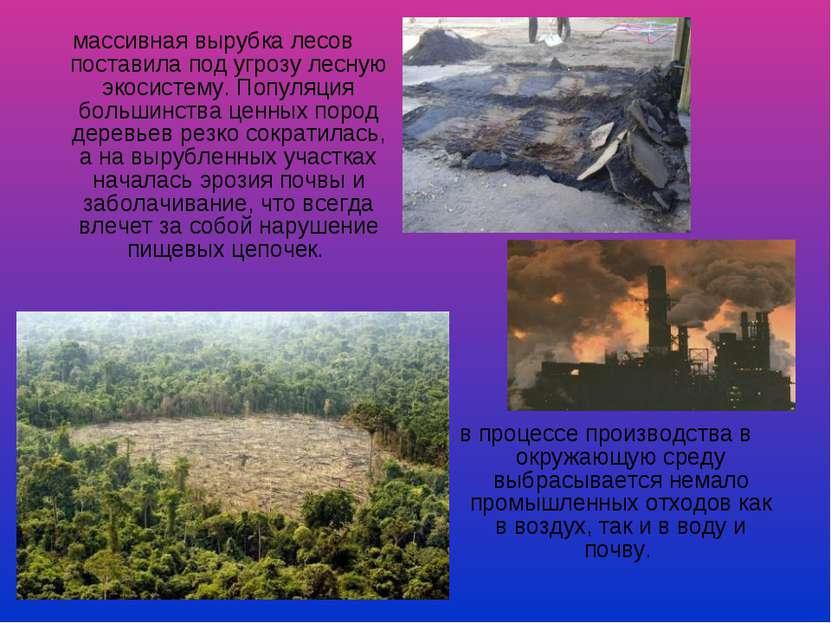 массивная вырубка лесов поставила под угрозу лесную экосистему. Популяция бол...