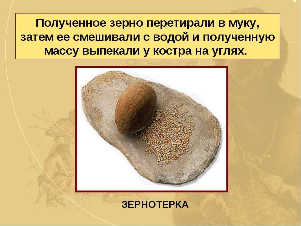 Полученное зерно перетирали в муку, затем ее смешивали с водой и полученную м...