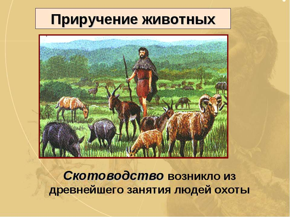 Приручение животных Скотоводство возникло из древнейшего занятия людей охоты