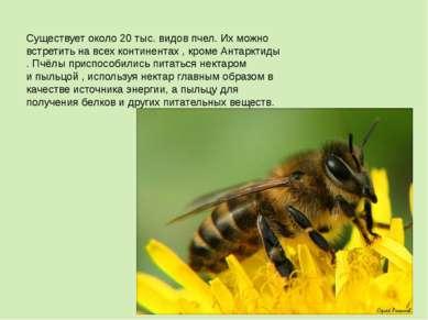 Существует около 20 тыс. видов пчел. Их можно встретить на всех континентах ,...