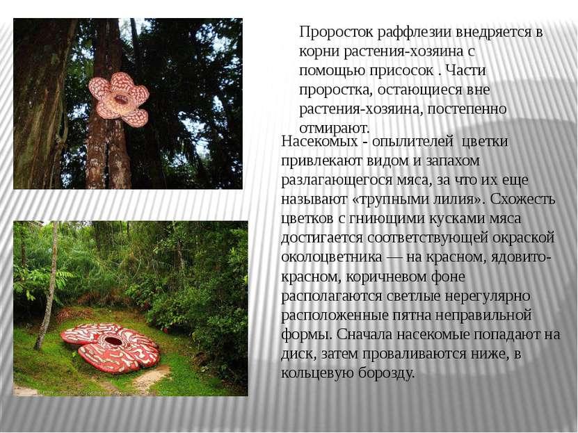 Насекомых - опылителей цветки привлекают видом и запахом разлагающегося мяса,...