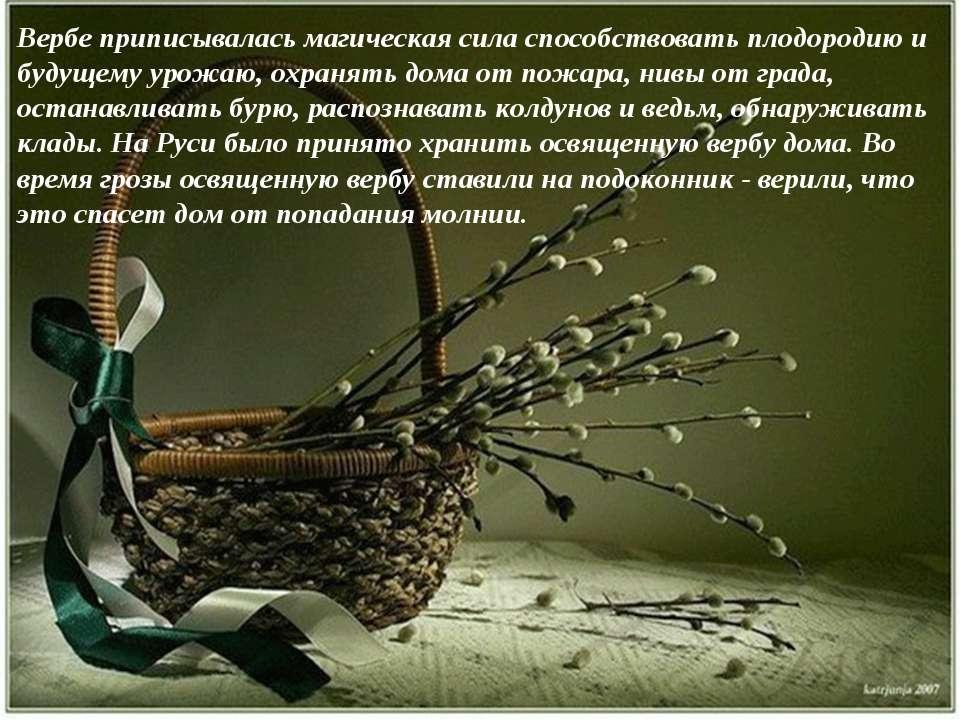 Вербе приписывалась магическая сила способствовать плодородию и будущему урож...