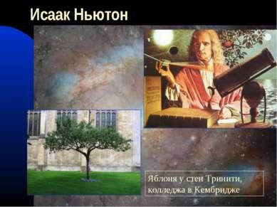 Исаак Ньютон Яблоня у стен Тринити, колледжа в Кембридже