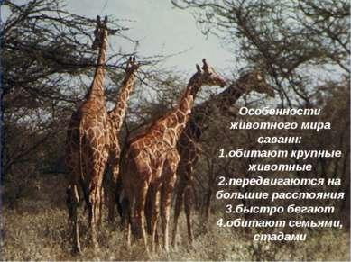 Особенности животного мира саванн: 1.обитают крупные животные 2.передвигаются...