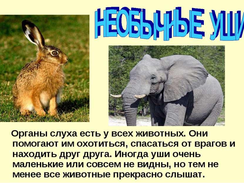 Органы слуха есть у всех животных. Они помогают им охотиться, спасаться от вр...