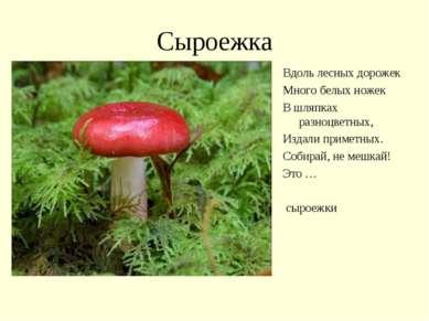 Сыроежка Вдоль лесных дорожек Много белых ножек В шляпках разноцветных, Издал...