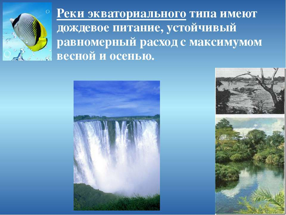 Реки экваториального типа имеют дождевое питание, устойчивый равномерный расх...