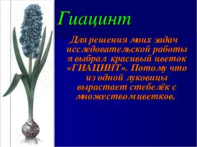 Гиацинт Для решения моих задач исследовательской работы я выбрал красивый цве...