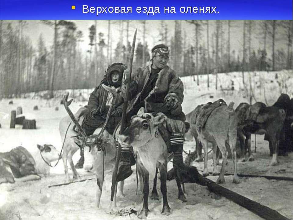 Верховая езда на оленях.