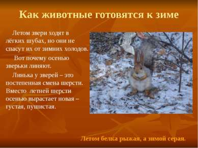 Как животные готовятся к зиме Летом звери ходят в лёгких шубах, но они не спа...