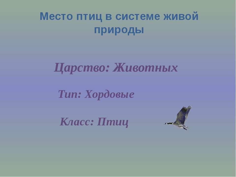 Место птиц в системе живой природы Царство: Животных Тип: Хордовые Класс: Птиц