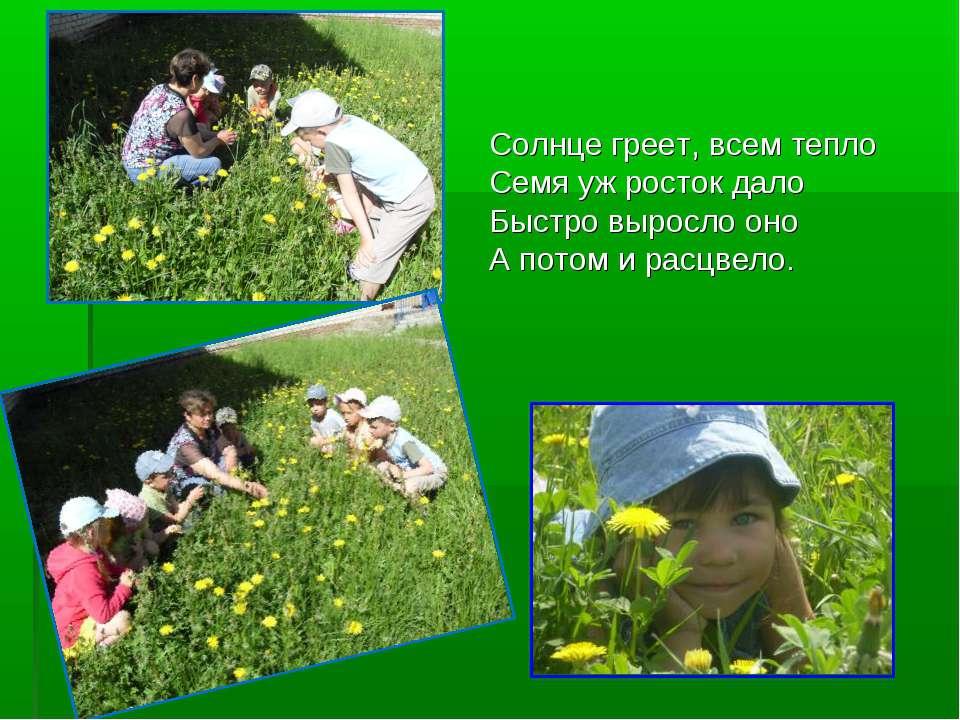 Солнце греет, всем тепло Семя уж росток дало Быстро выросло оно А потом и рас...