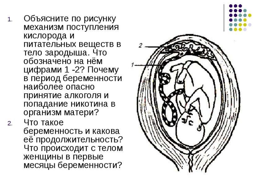 Объясните по рисунку механизм поступления кислорода и питательных веществ в т...