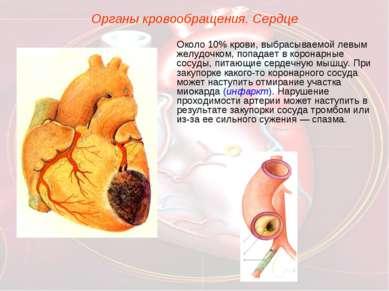 Органы кровообращения. Сердце Около 10% крови, выбрасываемой левым желудочком...