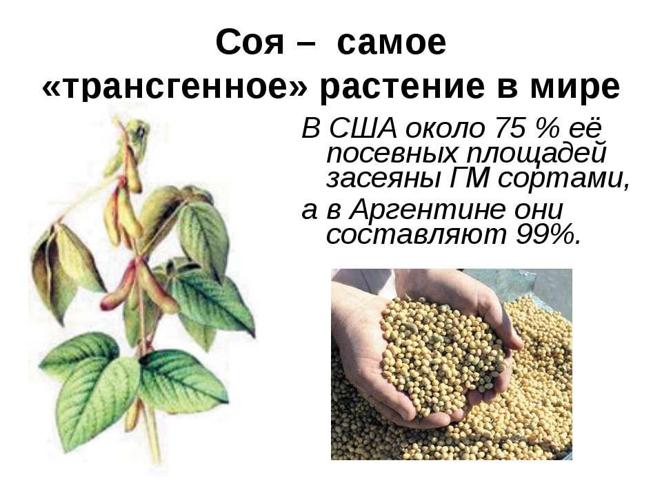 Соя – самое «трансгенное» растение в мире В США около 75 % её посевных площад...