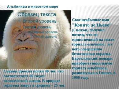 """Альбинизм в животном мире Свое необычное имя """"Копито де Ньеве"""" (Снежок) получ..."""