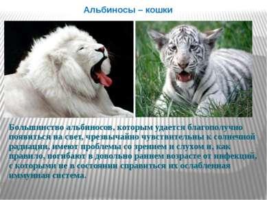 Альбиносы – кошки Большинство альбиносов, которым удается благополучно появит...