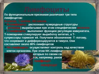 Лимфоциты По функциональным признакам различают три типа лимфоцитов: B-клетки...
