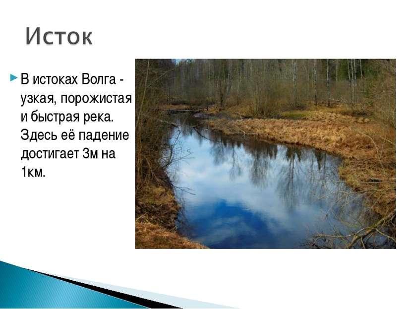 В истоках Волга - узкая, порожистая и быстрая река. Здесь её падение достигае...