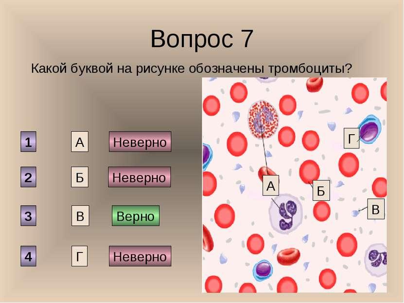 Вопрос 7 Какой буквой на рисунке обозначены тромбоциты? А Б В Г 1 2 3 4 Верно...