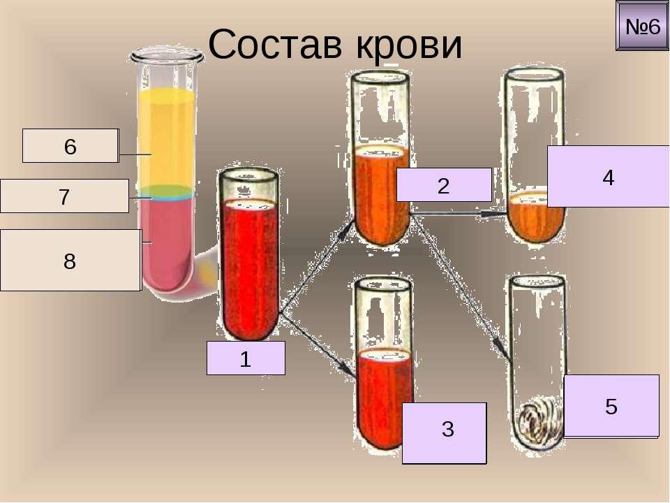 Состав крови Кровь 1 Плазма 2 Клетки крови Кровяная сыворотка 4 Белок фибрин ...