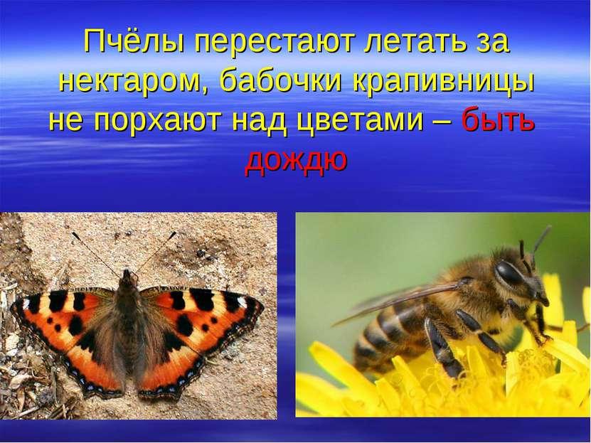 Пчёлы перестают летать за нектаром, бабочки крапивницы не порхают над цветами...