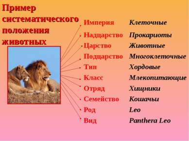 Пример систематического положения животных Империя Клеточные Надцарство Прока...