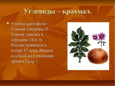 Углеводы – крахмал. Родина картофеля –Южная Америка. В Европу завезен в серед...