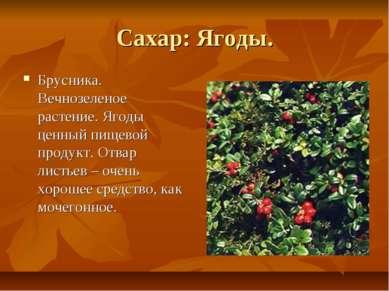 Сахар: Ягоды. Брусника. Вечнозеленое растение. Ягоды ценный пищевой продукт. ...