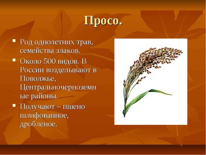 Просо. Род однолетних трав, семейства злаков. Около 500 видов. В России возде...