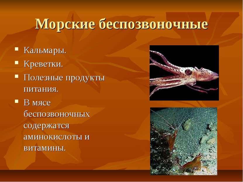 Морские беспозвоночные Кальмары. Креветки. Полезные продукты питания. В мясе ...