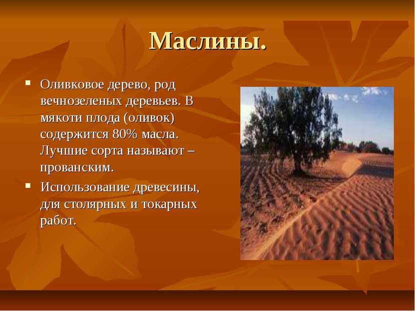 Маслины. Оливковое дерево, род вечнозеленых деревьев. В мякоти плода (оливок)...