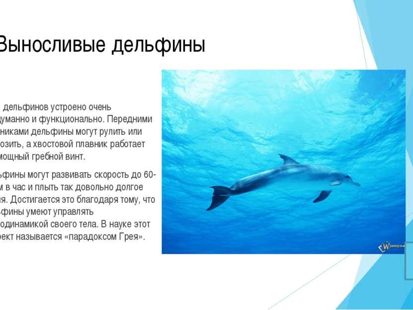 Дельфины спят