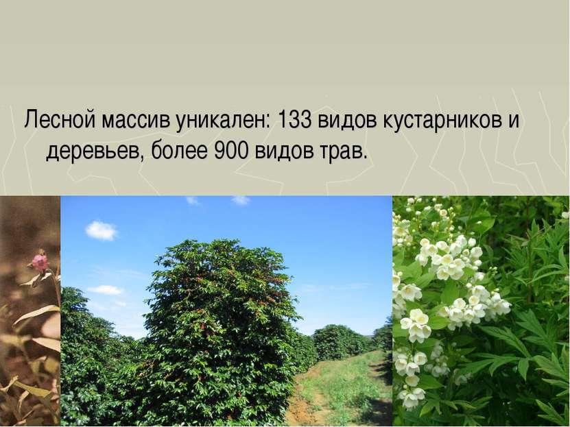 Лесной массив уникален: 133 видов кустарников и деревьев, более 900 видов трав.