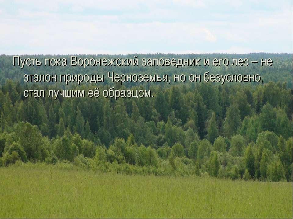 Пусть пока Воронежский заповедник и его лес – не эталон природы Черноземья, н...