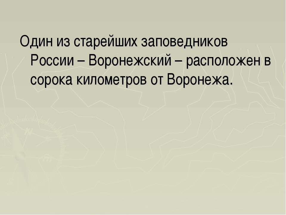 Один из старейших заповедников России – Воронежский – расположен в сорока кил...