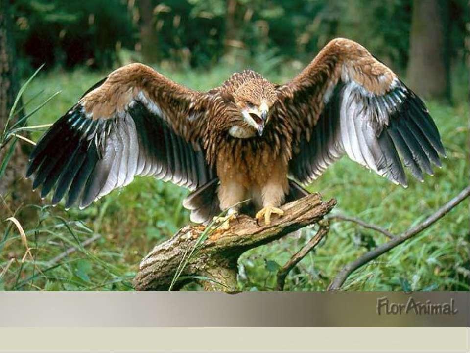 55 видов зверей и 200 видов птиц. От крошечных землероек до лосей, от корольк...