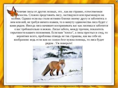 Отличие лисы от других псовых, это , как ни странно, естественная нежность. С...