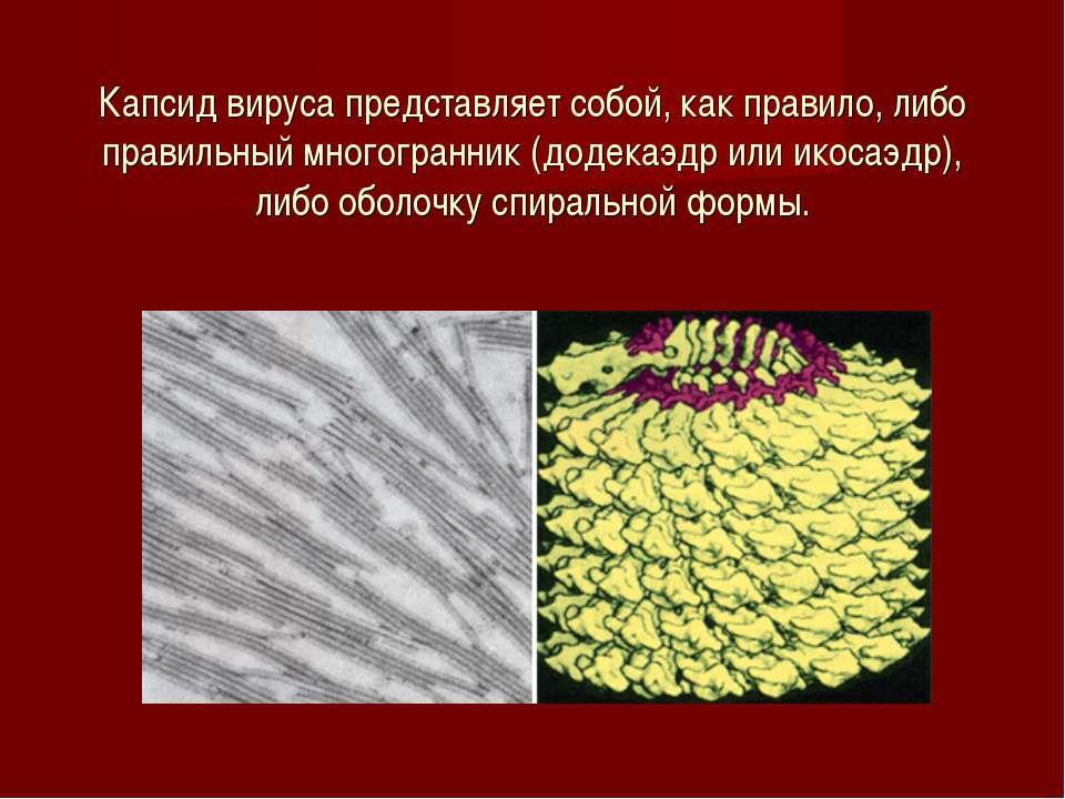 Капсид вируса представляет собой, как правило, либо правильный многогранник (...