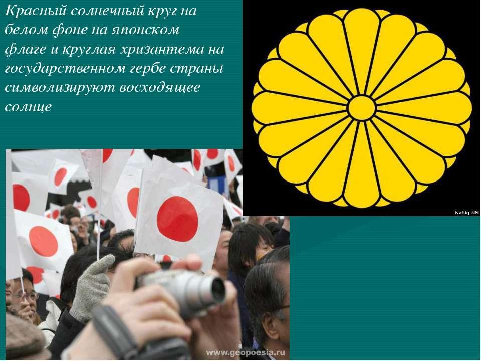 Красный солнечный круг на белом фоне на японском флаге и круглая хризантема н...
