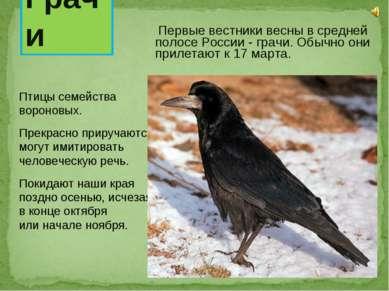 Первые вестники весны в средней полосе России - грачи. Обычно они прилетают к...