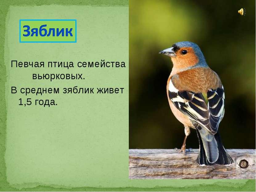Певчаяптицасемейства вьюрковых. В среднем зяблик живет 1,5 года.