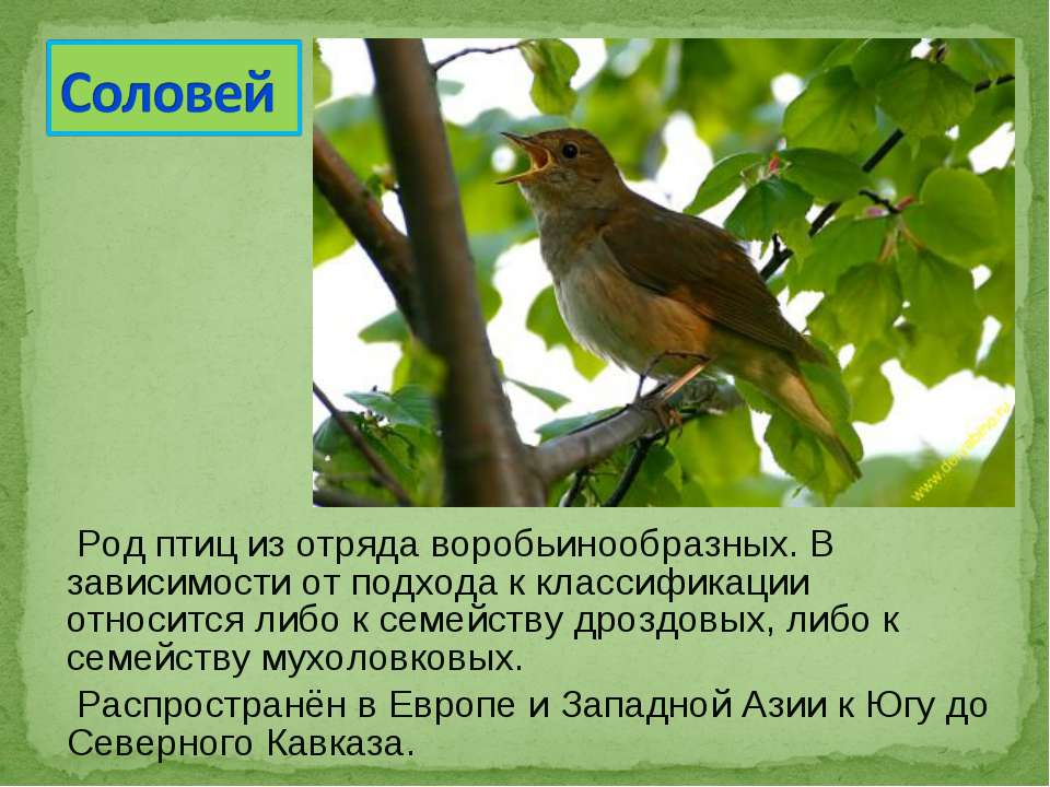 Род птиц из отряда воробьинообразных. В зависимости от подхода к классификаци...